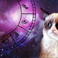 12 gatinhos e seus signos do zodíaco: é a CATstrologia!