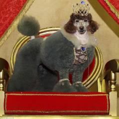 20 tosas de cachorro mais absurdas e engraçadas de todos os tempos