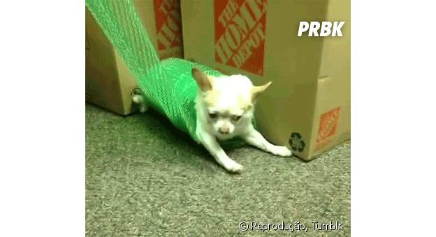 20 cachorros que definitivamente não sabem brincar de esconde-esconde com seus donos!