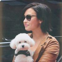 Lady Gaga, Demi Lovato, Chay Suede e mais: veja os famosos com seus cachorrinhos!