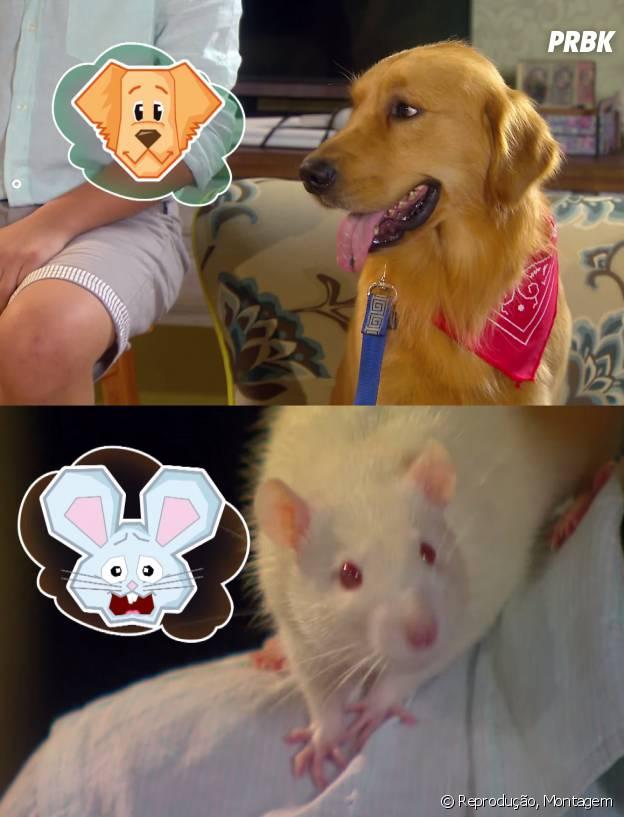 """Os animais conversam entre si em """"Cúmplices de um Resgate""""!"""