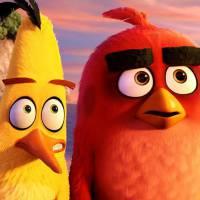 """Marcelo Adnet e Dani Calabresa em """"Angry Birds: O Filme"""": casal vai dublar a animação!"""
