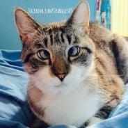 Conheça Spangles, o gatinho vesgo que faz o maior sucesso com suas fotos no Instagram e Facebook!