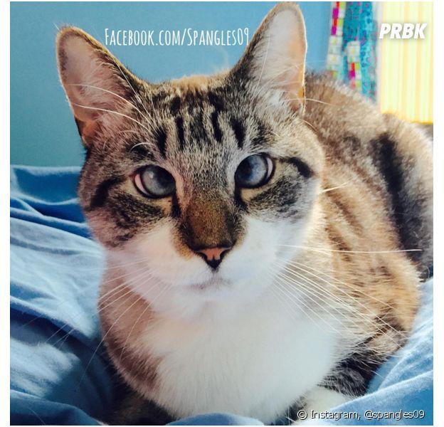 Spangles é um gatinho super fotogênico que possui vários seguidores nas redes sociais!