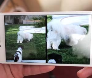 iPhone 7, da Apple, sem bordas laterais na tela? Suposta imagem do aparelho vaza na internet!
