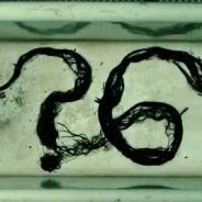 """Em """"American Horror Story"""": na 6ª temporada, teaser mostra Lady Gaga ao som de """"Perfect Illusion""""!"""