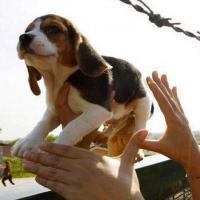 Ativistas resgatam cães de Instituto Royal no interior de São Paulo