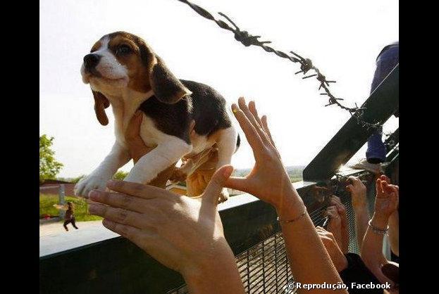 Ativistas resgataram cães da raça beagle do Instituto Royal, no interior de São Paulo