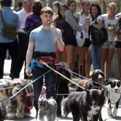 Daniel Radcliffe roda filme em Nova York cercado por vários cachorros