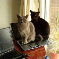 Dell garante a clientes que seus laptops não têm cheiro de xixi de gato