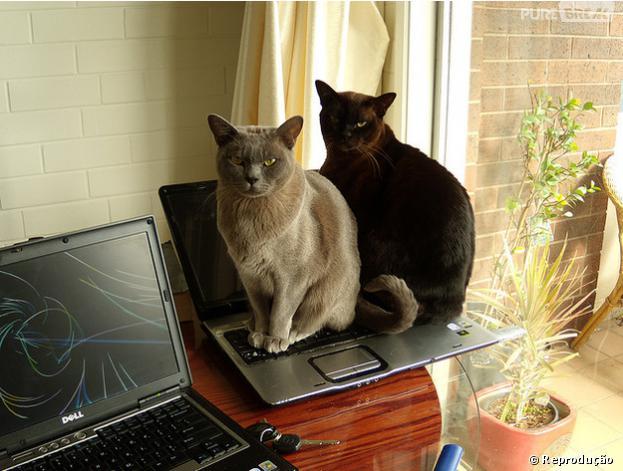 Xixi de gato é o último cheiro que queremos sentir ao tirar nosso laptop da caixa