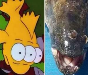 """O """"peixe radioativo"""" de 3 olhos saiu de Springfield para a vida real!"""