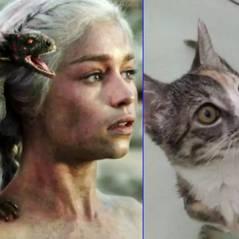 """De """"Game of Thrones"""": Veja 13 gatos que são parecidos com personagens da série! #risos"""