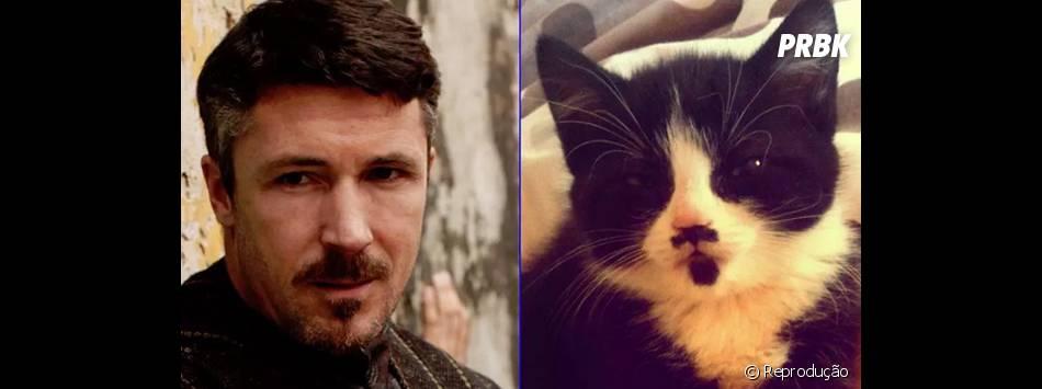 "Petyr Baelish (Aidan Gillen), de ""Game of Thrones"", também tem um sósia animal"