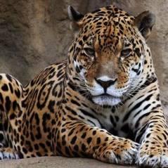 Descubra quais são os 20 animais que mais matam o ser humano! Você vai se surpreender...