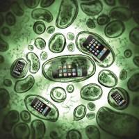 Vírus no celular: aprenda como evitar ser infectado com algumas dicas básicas de segurança!