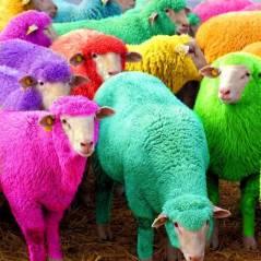 Selena Gomez, Nina Dobrev, Rihanna e mais mostram o significado das cores para o Ano Novo!