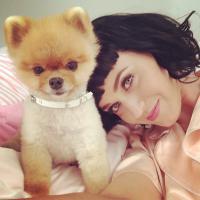 """Katy Perry muda corte de cabelo! Veja os looks da cantora de """"Dark Horse"""""""