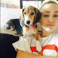 """Miley Cyrus adota mais uma cadela de estimação: """"Nova integrante da minha família"""""""