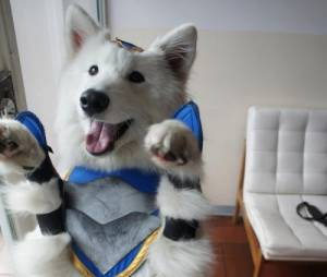"""League Of Legends"": Cosplay Volibear (o mais fofo do mundo!)"