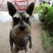Veja 5 situações de cachorros fofos que são mais bravos do que parecem!