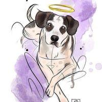 Após triste história do cachorro do Carrefour, Maíra Medeiros mostra como ajudar animais de rua