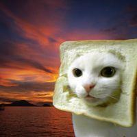 Imagina ser uma fatia de pão de forma? Nesse videogame você vai ser!