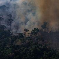 O Dia da Amazônia é nesta quinta (5), mas não temos lá muitos motivos para comemorar
