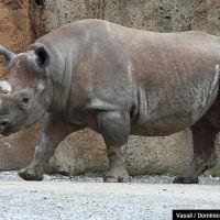 15 animais que deixaram de existir nos últimos anos! Veja quais são!