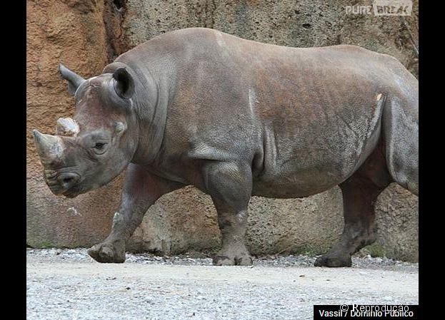 Em 2011 o rinoceronte negro também deixou de existir