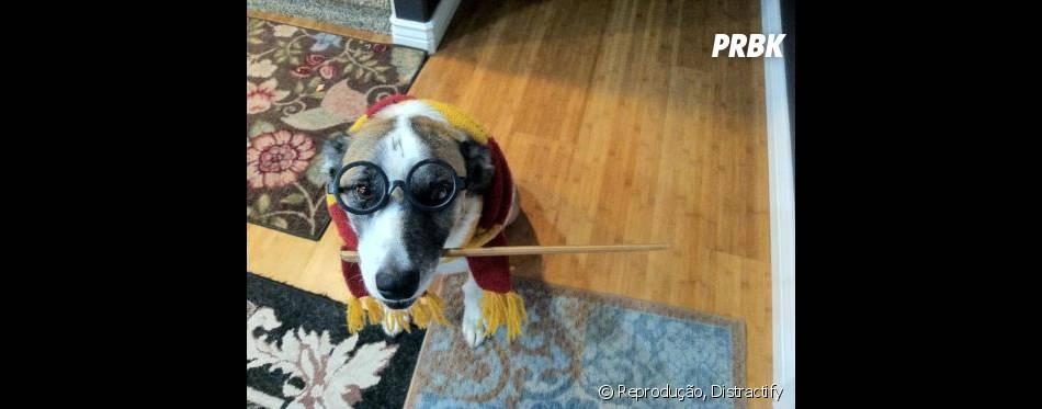 Esse Harry Potter iria derrotar Voldemort com tanta fofura