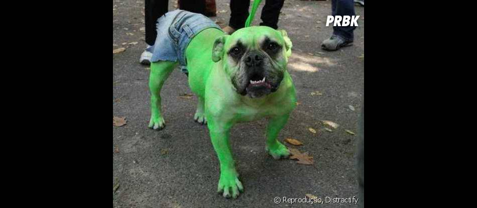 Esse Hulk não parece ser tão bravo assim, mas você se arriscaria?