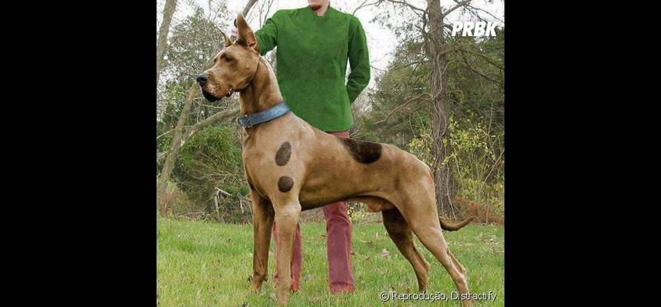 Scooby Doo é a fantasia perfeita para qualquer cachorro