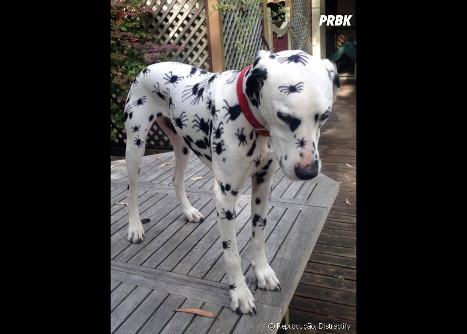 """""""Socorro! Tem um cachorro sendo atacado por aranhas! Não, pera..."""""""