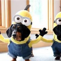 Halloween: 22 fantasias criativas para você experimentar nos seus cachorrinhos!