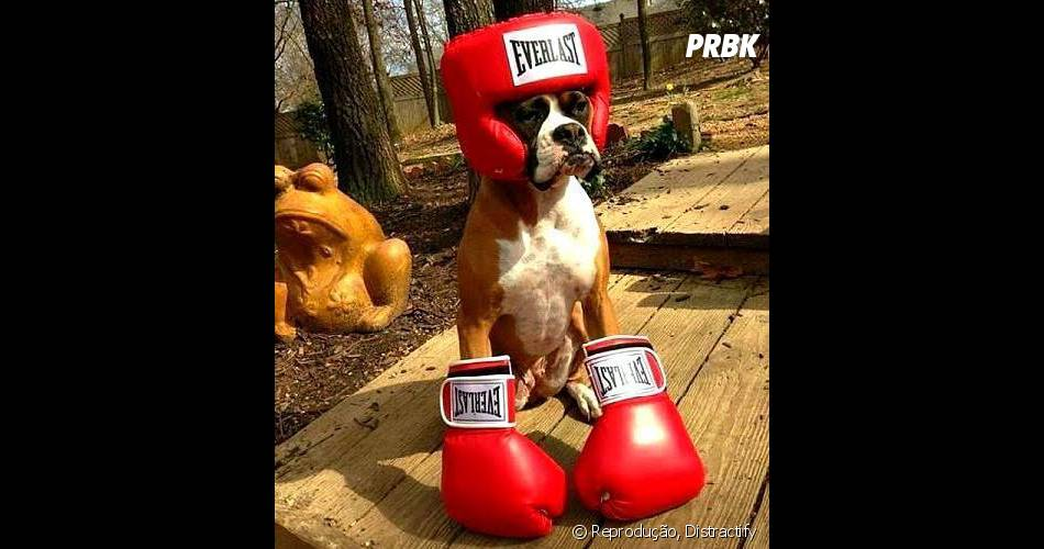 Quem aceita entrar no ringue com esse super campeão?