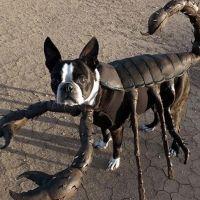 Astrologia: o que o signo de Escorpião e o Halloween tem em comum? Descubra!
