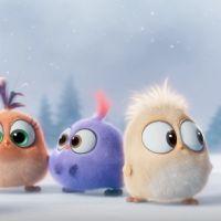 """De """"Angry Birds: O Filme"""": filhotes de aves tentam cantar músicas de Natal em novo vídeo divulgado"""