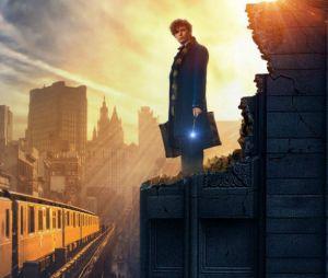 """""""Animais Fantásticos e Onde Habitam"""" é o primeiro spin-off da saga """"Harry Potter"""""""