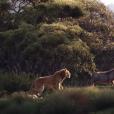 """Live-action de """"O Rei Leão"""" estreia 18 de julho nos cinemas"""