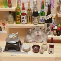 """Confira as imagens do hamster que """"trabalha"""" em um minibar japonês"""