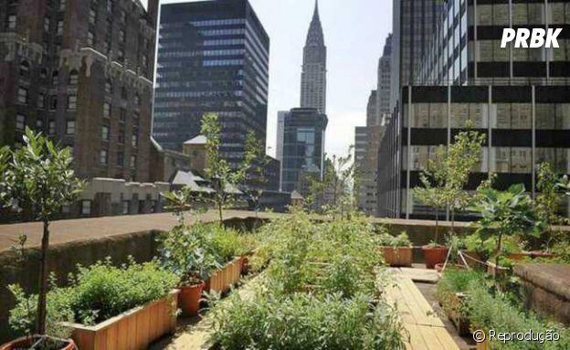 Agricultor urbano é uma das profissões mais promissoras do momento