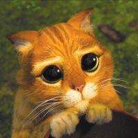 Do Pikachu ao Gato de Botas: Veja 15 bichinhos do cinema que todo mundo quer ter em casa!