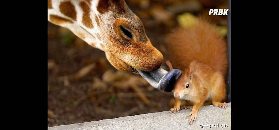 Foto que mostra momento de carinho entre os animais - Purebreak