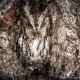 Mal dá pra perceber que tem uma coruja na foto! Que camuflagem!