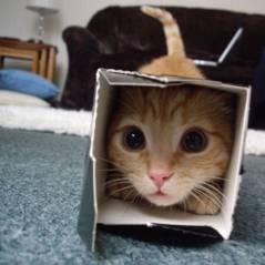 30 gatos aventureiros que se escondem nos lugares mais inusitados!