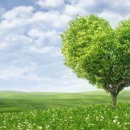 Dia dos Namorados: Confira 6 presentes ecológicos e saudáveis para surpreender seu par romântico!