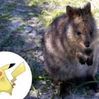 """De """"Pokémon"""": conheça as 36 inspirações reais dos monstrinhos de bolso!"""