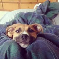 Tinder animal? Veja 8 cachorrinhos que mostram as reações que todo mundo tem no aplicativo!