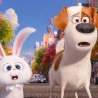 """Animação """"Pets: A Vida Secreta dos Bichos"""" supera """"A Lenda de Tarzan"""" e lidera a bilheteria nos EUA!"""